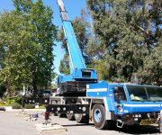 cranes137