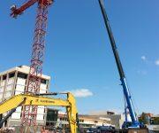 cranes142